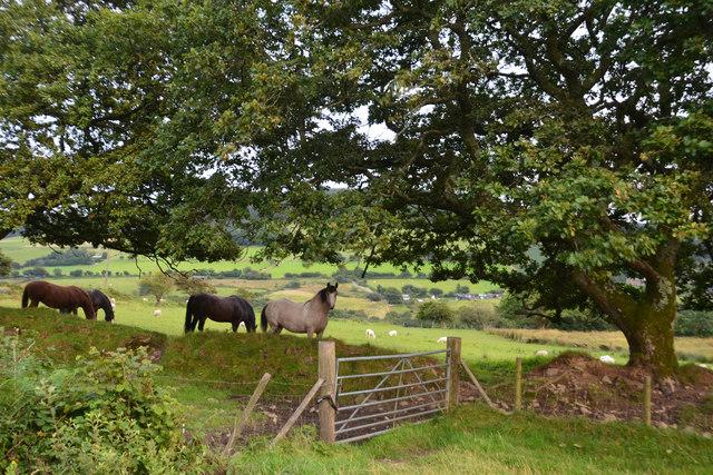 Neath Port Talbot : Grassy Field & Horses