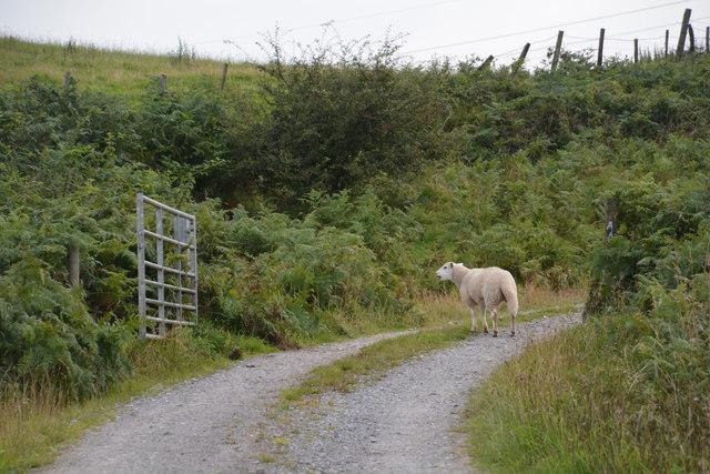 Neath Port Talbot : Track