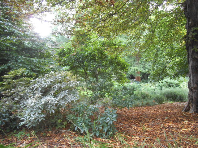 Woodland in Golders Hill Park