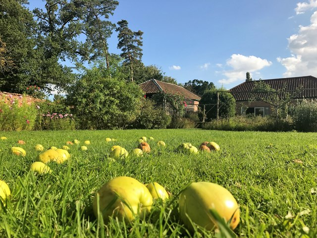 Fallen apples in the herb garden at Congham Hall in Norfolk