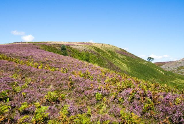 Bracken and heather on ridge above Beldon Cleugh