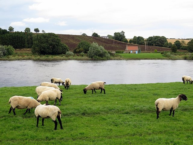 River Tweed south of Paxton Toll House