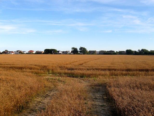 Well Field