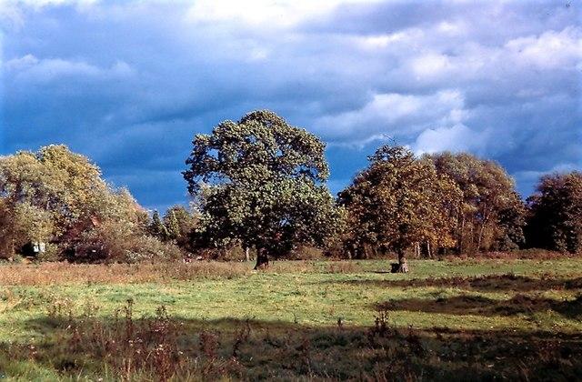Fields before Lower Earley development