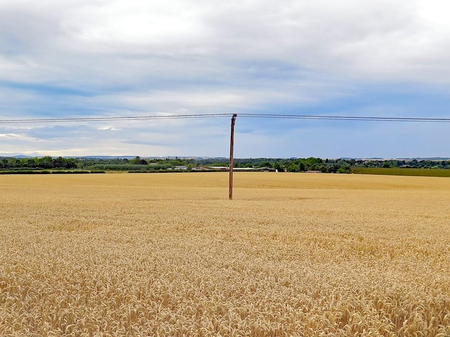 Wheat field west of Loanend House