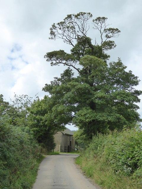 Tree outside Down Farm