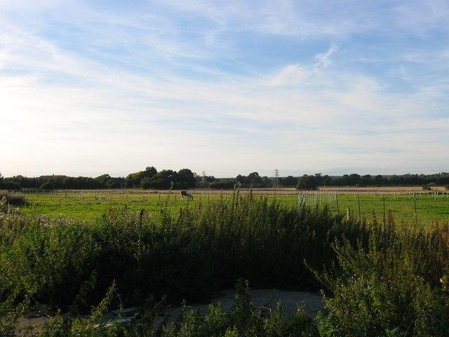 Lake's Field