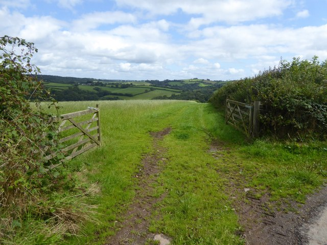 Field and track towards Thongsleigh Wood