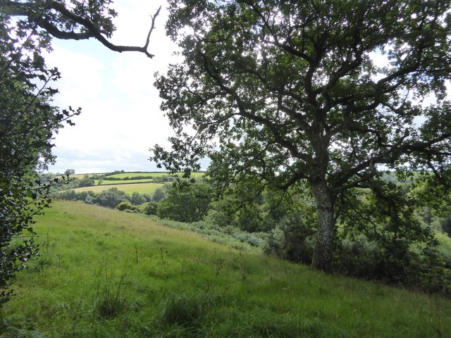 Field and scrub above Coombeland