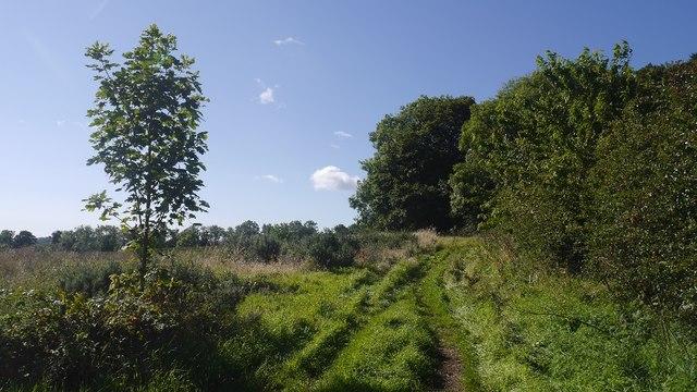 Path by Kyloe Wood