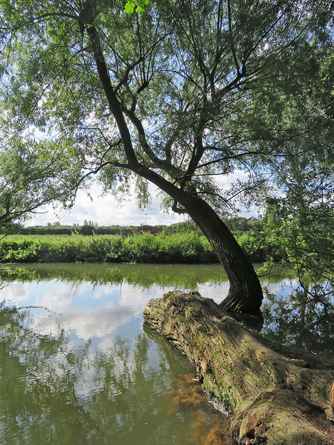 Newnham: across the Cam at Paradise Local Nature Reserve