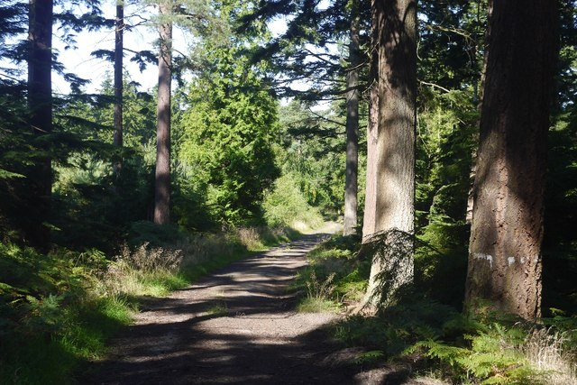 Lowick Road, Kyloe Woods