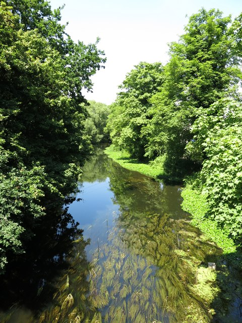 The River Colne upstream of the Iver Lane bridge (2)