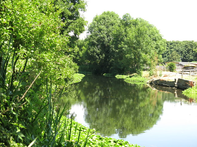 The River Colne west of Old Mill Farm (2)