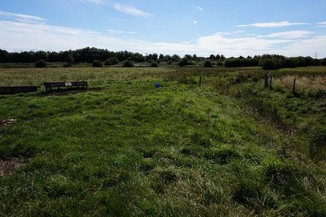 Path leading towards Easingwold Plantation