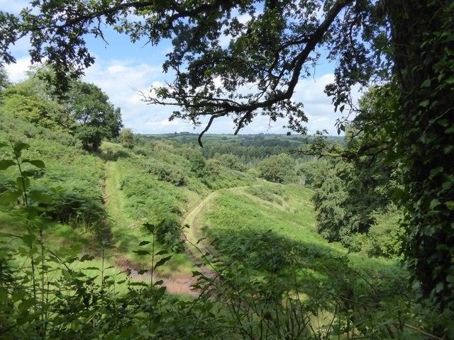 Tracks through the bracken covered hillside