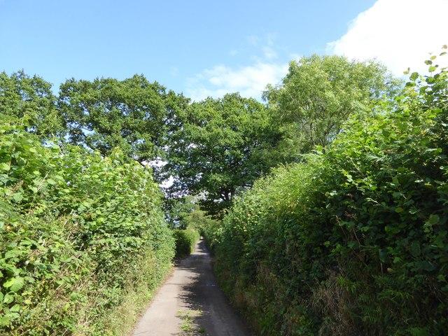 Trees marking field boundaries on Blackberry Down