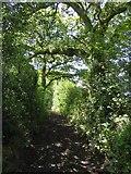 SS9009 : Larkey Lane by David Smith