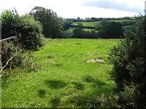 SS9109 : Field south of Larkey Lane by David Smith