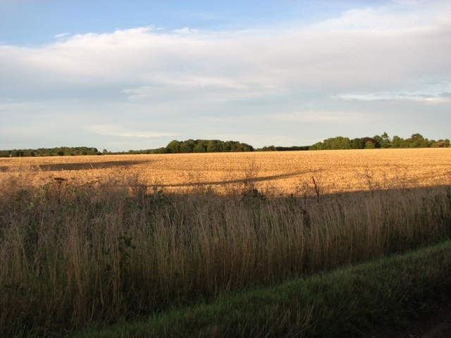 Harvested fields in evening sunshine