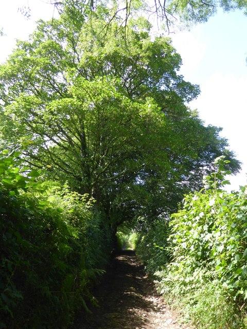Larkey Lane