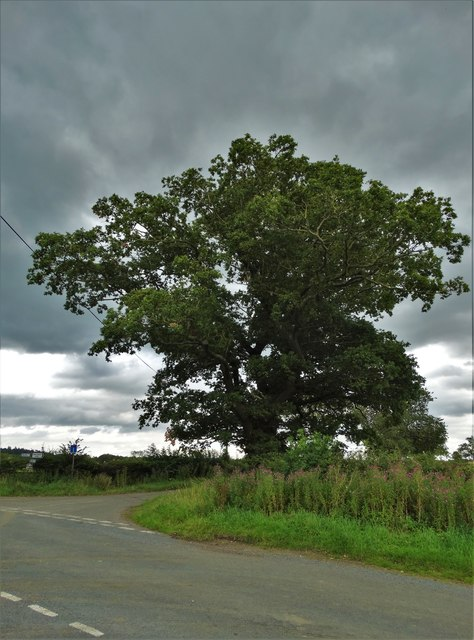Crossroad and oak tree near Cross Lane Farm