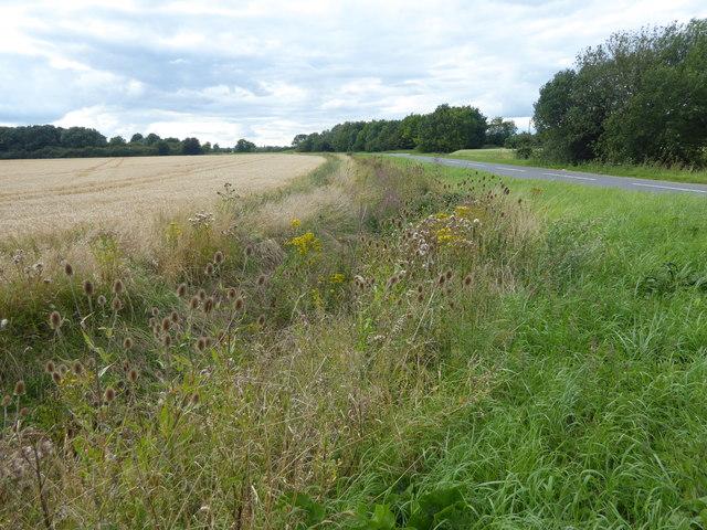 Ditch alongside Navenby Lane