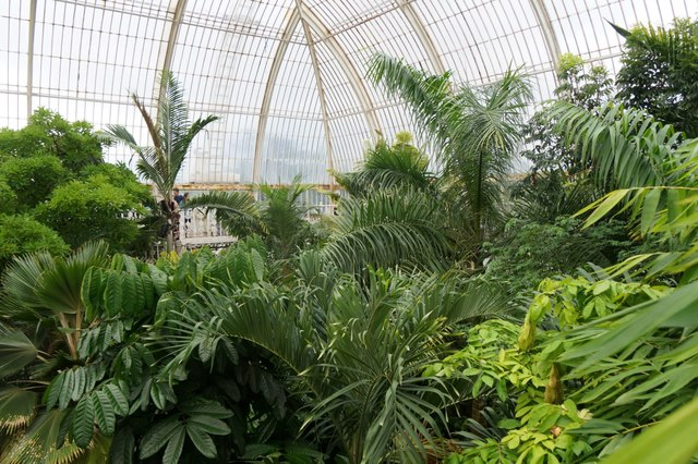 The upper level inside the palm house, the Royal Botanic Gardens, Kew