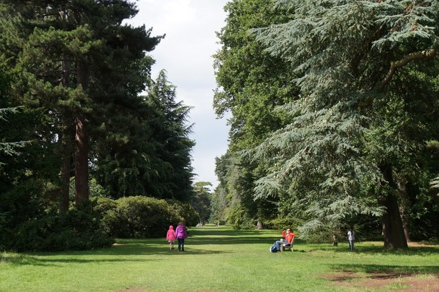 The Cedar Vista, the Royal Botanic Gardens, Kew
