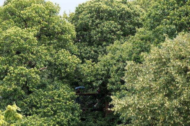 Walkers on the Treetop Walkway, the Royal Botanic Gardens, Kew