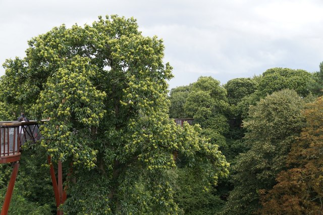 The Treetop Walkway, the Royal Botanic Gardens, Kew