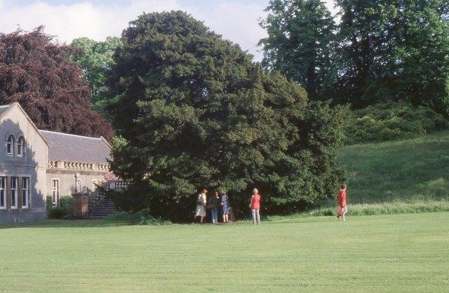 John Knox's yew tree, Finlaystone House
