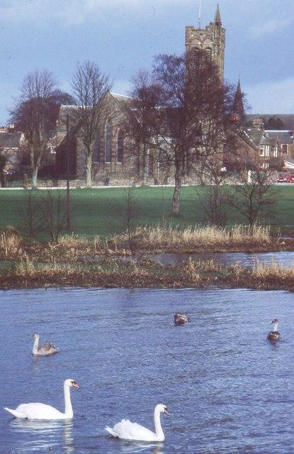 Mute Swans, Carlingwark Loch