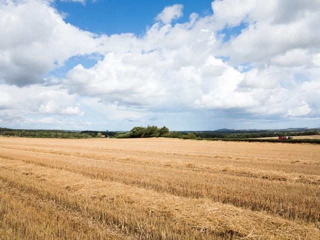 Stubble field adjacent to Beaney Lane