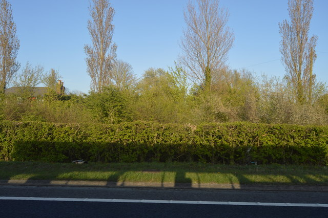 Hedge by A2070