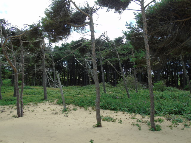 Pinewood at Formby Point