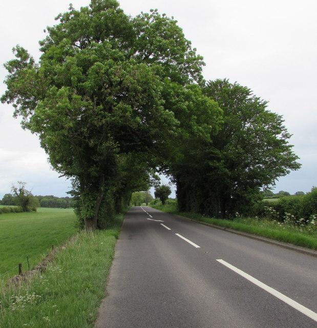 Tree canopy over the A429 near Kemble