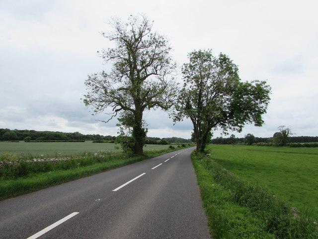 Roadside trees near Kemble