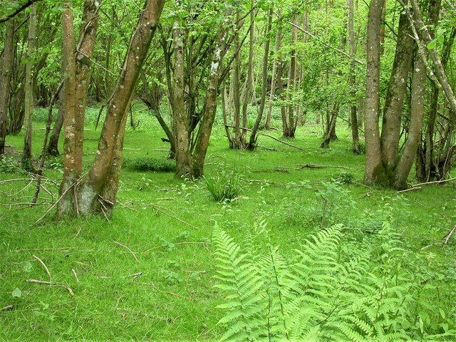Coppice on Purbeck limestone, Holman's Wood