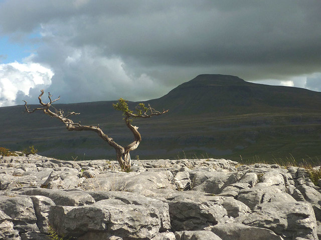 Clinging to life, Twisleton Scar End