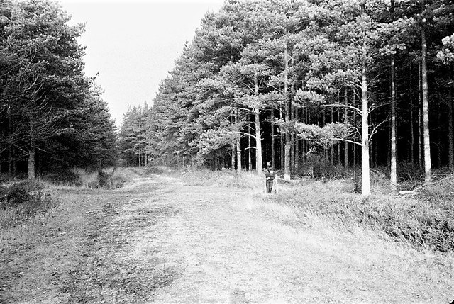 Gorrick Plantation Wokingham