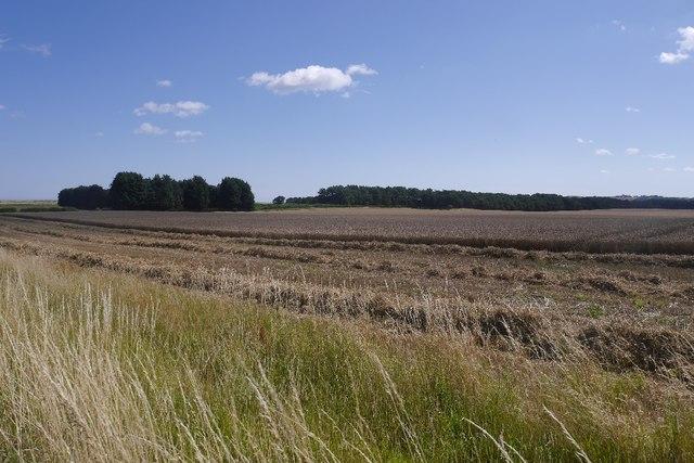 Wheat harvest, Ross