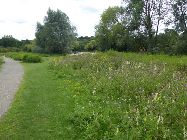 Wild flowers by The Lake in Hainault Forest Country Park