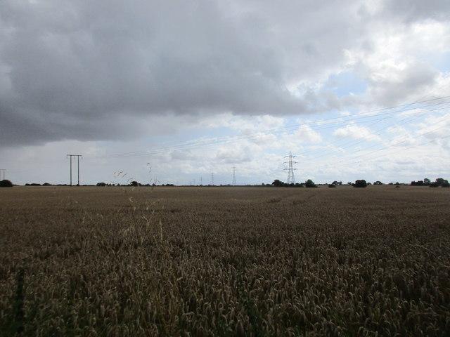 Wheatfield under a dark sky near Thirtleby