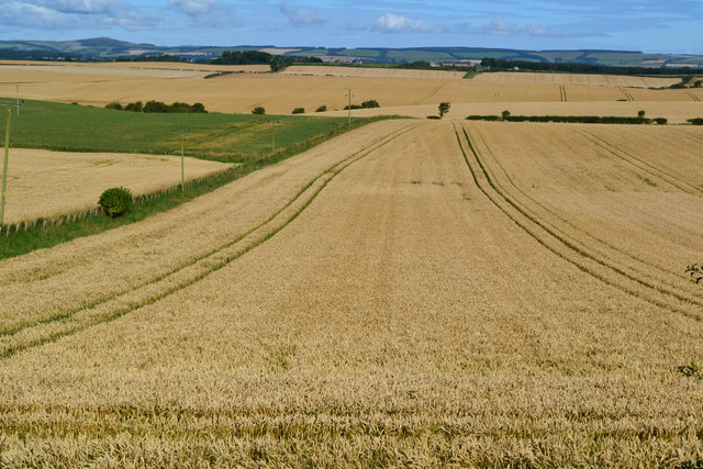 Crop field at Whitsome