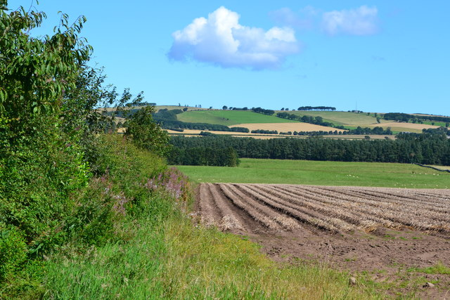 Corner of field at Lintlaw