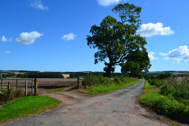 Lane east from Lintlaw
