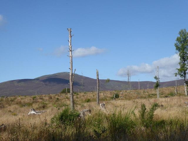 Likeleys Hill plantation