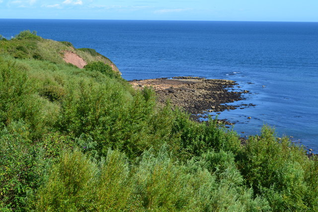 Wooded cliff at Cove
