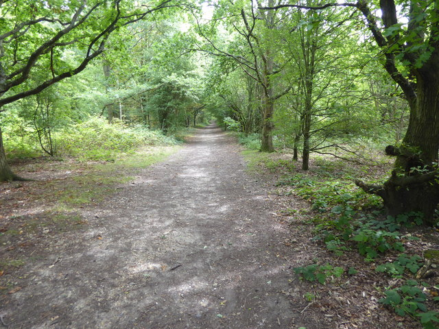 The London LOOP in Hainault Forest Country Park